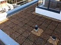 Another view of a green roof